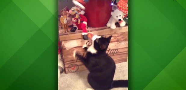 Chris Moyles Cat Christmas Tree